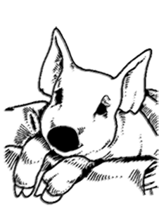 Cochon2